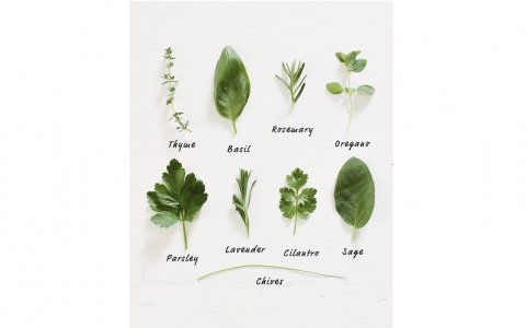 Tips for Growing Your Own Cooking Herbs Picture