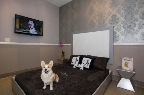 What you should be looking for in a dog kennel