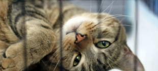 What to do after adopting a cat