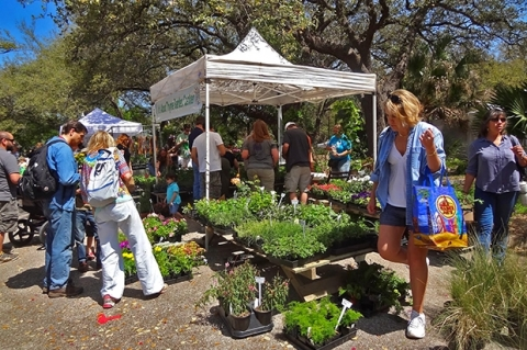 Why are gardening enthusiasts so drawn to festivals