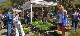Why are gardening enthusiasts so drawn to festivals?